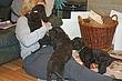 Meagan-puppies-2011-day-46b.jpg