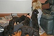 Meagan-puppies-2011-day-46c.jpg