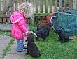 Meagan-puppies-2011-day-48c.jpg