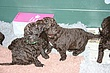 Megpups2009days33_34B.jpg