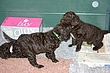 Megpups2009days33_34D.jpg