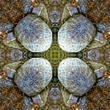 Bear Creek Mandala 5.jpg