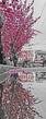 Market Cherries Vert Puddle Pano BWP 2019.jpg