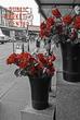 Market Roses 2018.jpg