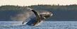 Whale Pano(1).jpg