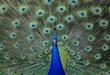 Animals--23.jpg