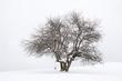Citedal Hill Tree(1).jpg