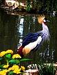 Crested Crane Majesty.jpg