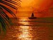 Maui Gold.jpg