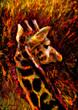 Giraffe at High Noon.jpg