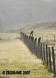 Birds on the Fence Row.jpg