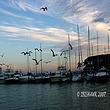 Causeway Boats and Birds SunRise.jpg