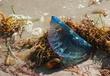 Crandon Beach 09-112.jpg