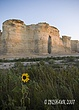 Kansas Sunflower with Monument Rocks.jpg