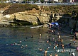 La Jolla Swimmers in recreation area.jpg