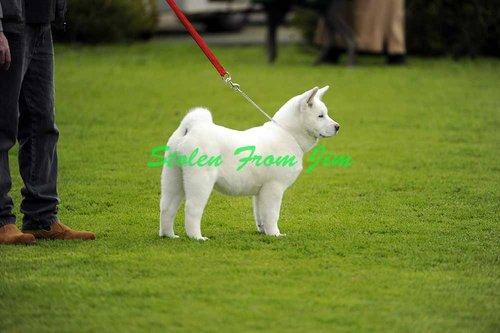 DOGS-14-8-10-A-001.jpg