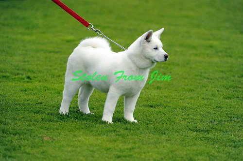 DOGS-14-8-10-A-148.jpg