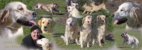 retrievers_edited-1.jpg