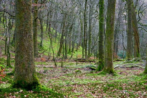 The woods at Buttermere.jpg
