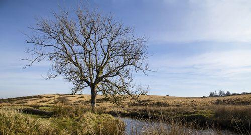 A Dartmoor view with tree - Dartmoor - Devon - England.jpg