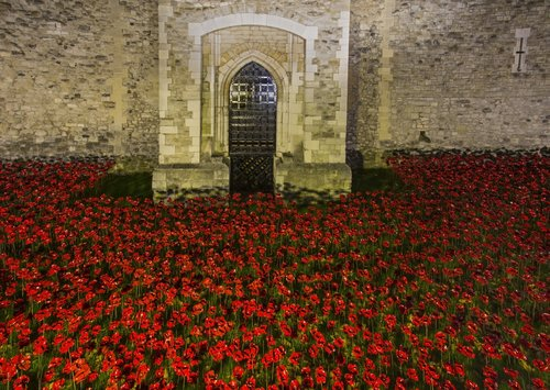 Poppies fill the moat in the Tower of London to commemorate 100 years since World War I - London.jpg