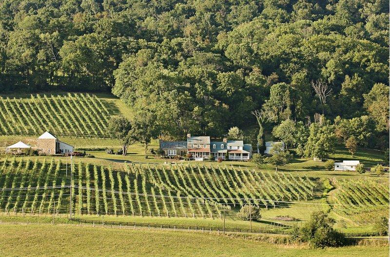 6. 5B. Hillsborough Vineyards and Winery.jpg
