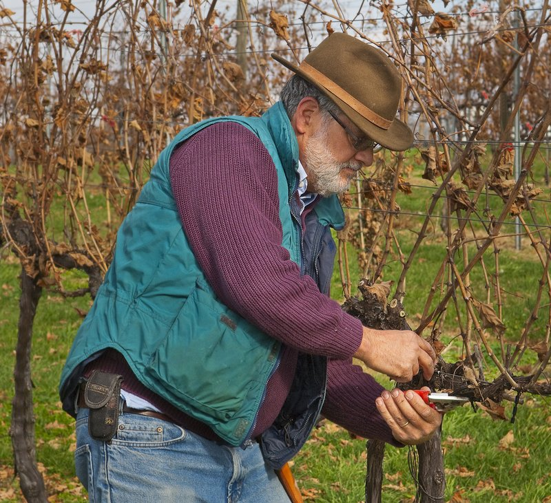 94 Doug Fabbioli - winter pruning 1.jpg
