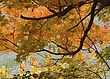autumn067.jpg