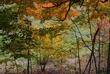autumn069.jpg