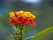 flower7.jpg