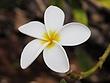 flower8.jpg