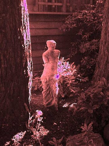 Venus-Neon-Glow.jpg