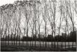 10It.Trees_4424g.jpg