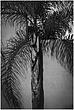 12CA.SB-PalmShadow_6479g.jpg