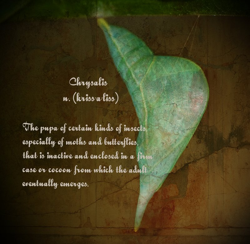 Chrysalis.jpg :: Dictionary of Image: Chrysalis  The Chrysalis of a Cloudless Sulphur