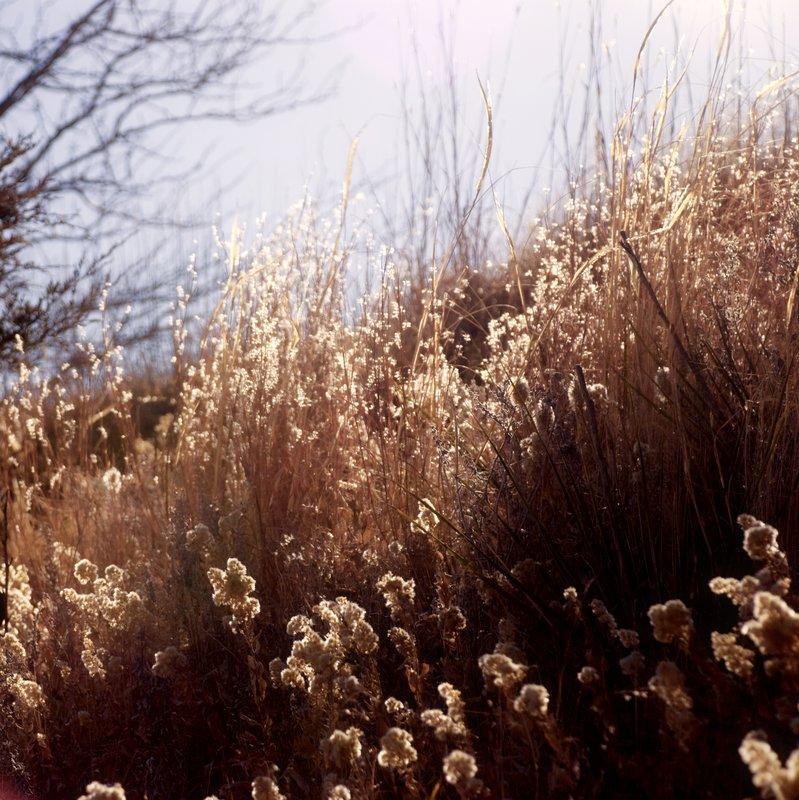 Dipped in Sunshine.jpg :: Taken on Pawnee Rock, Kansas.