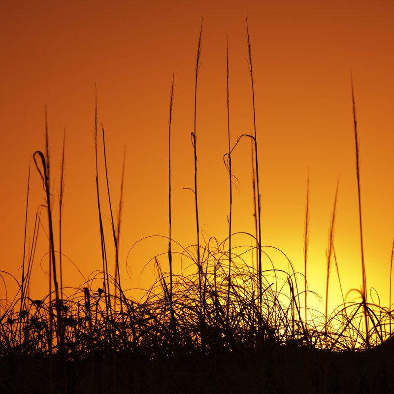 Grassy Sunset.jpg :: ©2012 LKG Photography