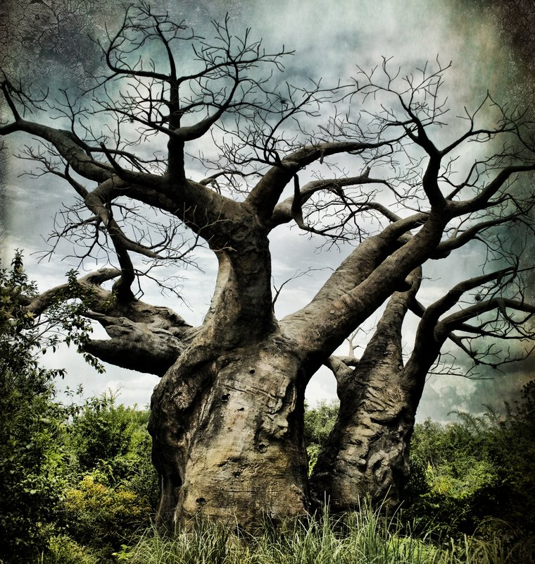Last March of the Ents.jpg :: The Ents are going to war. It is likely that we go to our doom. The last march of the Ents.  Treebeard, The Two Towers by J.R.R. Tolkien