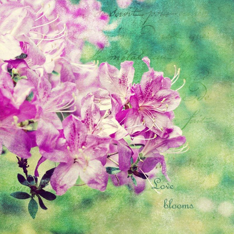 Love Blooms.jpg ::