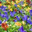 Flower Palette.jpg