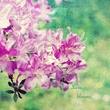 Love Blooms.jpg