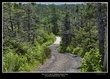 0715 -Trail to Western Brook Pond.jpg