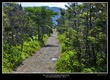0720 -Trail to Western Brook Pond.jpg