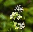 2364 -Flowers of W NFLD.jpg