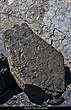 4185 -Amphibian Tracks - East Bay.jpg