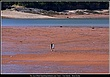 5531 -Mud Walk -Five Islands -NS.jpg