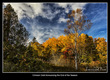 _LRN6015 -The Golden Colours of Fall.jpg