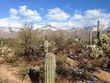 Tucson Snow Sabino-2015-0101-0703.jpg
