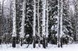 IMG_1493 Aspens Snow Blanket.jpg