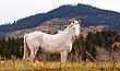 Wild Horses IMG_3131.jpg